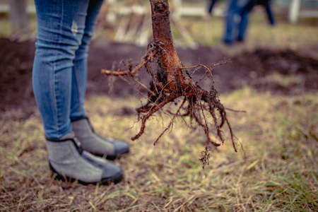 Hands planting a tree. planting a tree. tree root. eco tourism. greening the planet