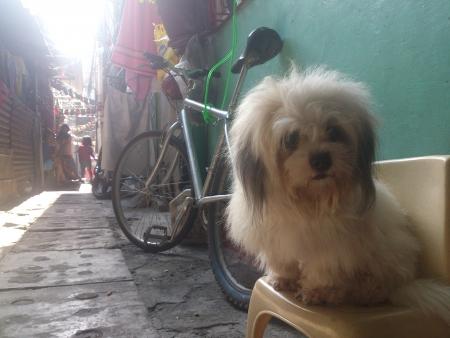 tierschutz: Ein Hund sitzt auf einem Stuhl Lizenzfreie Bilder