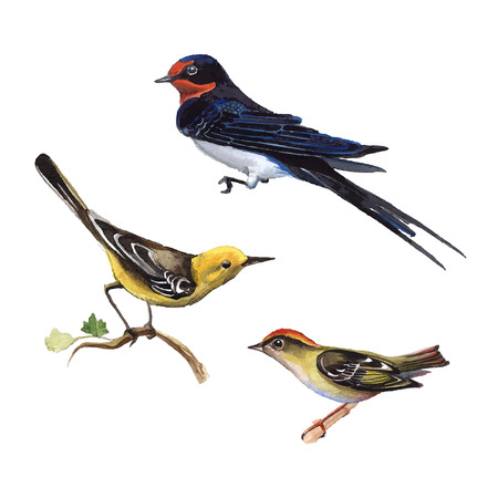 Set of watercolor birds Illustration
