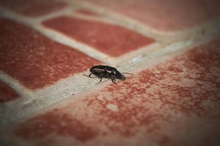 Bug on tiles