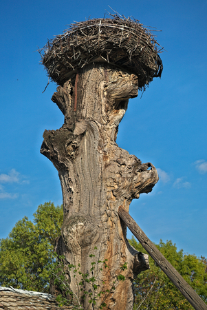 Stork nest at top of old dry tree Stock Photo