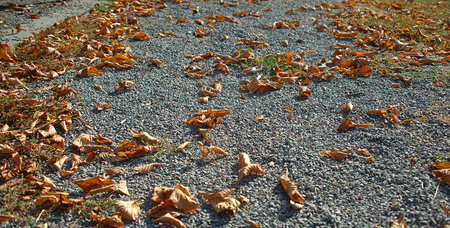 Dry brown fallen leaves on an gravel pathway