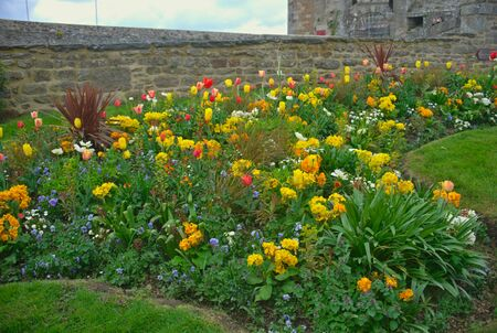 Various different blooming plants on lawn and stone wall behind Archivio Fotografico