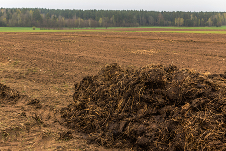 Fertilizer from cow manure and straw. Heap of manure, have been taken out on the field in early spring to fertilize fields. Podlasie , Poland .