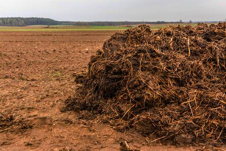 Meststof van koemest en stro. Hoop van mest, zijn in het vroege lente op het veld genomen om velden te bevruchten. Podlasie, Polen. Stockfoto