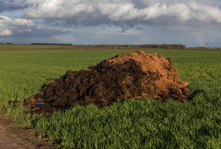 Engrais du fumier et de la paille. Le tas de fumier a été retiré sur le terrain au début du printemps pour fertiliser les champs. Podlasie, Pologne. Banque d'images - 76998222