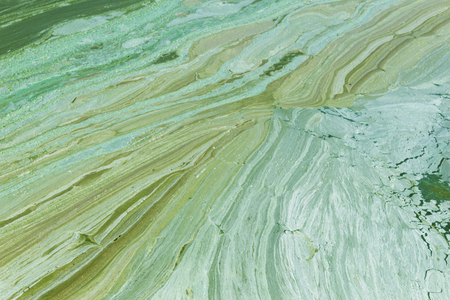 Algal bloom.Phytoplankton blooms in the sea or freshwater.Abstract texture and background for the site about lake, sea,ecology,art, seasons,disasters.