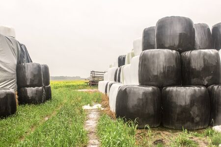 Rainy day. Round bales of silo wrapped in a black and white membrane and stacked like two pyramids. Food for cows. Agricultural farm.Podlasie, Poland.