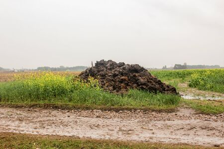 Fertilizer from cow manure and straw. A pile of black manure lies on the edge of a field near a dirt road. Milk farm. Podlasie, Poland.