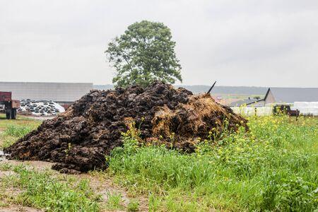 Engrais à base de fumier de vache et de paille. Un tas de fumier se trouve au bord du champ. Arbre, balles de silo et granges en arrière-plan. Podlasie, Pologne.