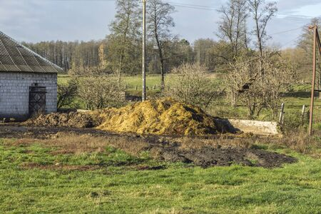 A large pile of cow dung lies near the stone wall of the barn. Yard on a dairy farm. Podlasie. Poland. Stock Photo