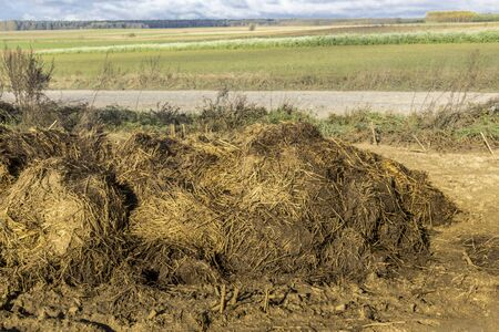 A pile of cow dung lies on a plowed field. Fertilizer fields on a dairy farm. Podlasie. Poland.