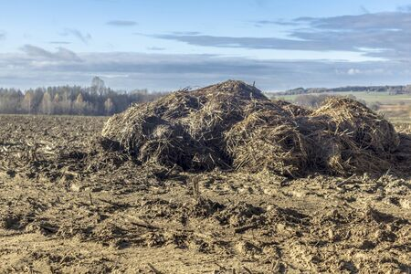 Sunny day. A  pile of cow manure and straw lies on a plowed field. Fertilizer fields on a dairy farm. Podlasie. Poland.