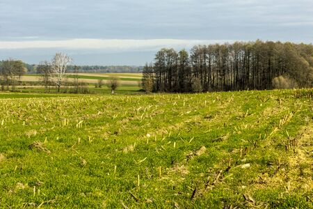 Late autumn. Mowed field of corn. Forest and fields in the background. Podlasie, Poland. 写真素材