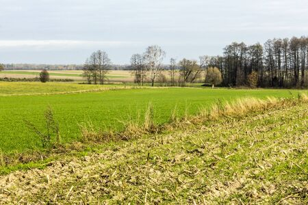 Late autumn. Mowed field of corn and meadow. Forest and fields in the background. Podlasie, Poland.