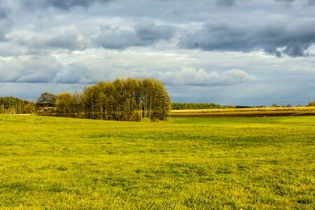 Late autumn. Mowed grass on a yellow-green meadow. Forest and fields in the background. Podlasie, Poland. 写真素材