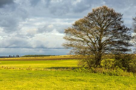 Late autumn. A lonely tree stands among the meadows. Forest in the background. Podlasie, Poland.
