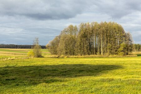 Late autumn. Several trees among the meadow. Forest in the background. Podlasie, Poland.