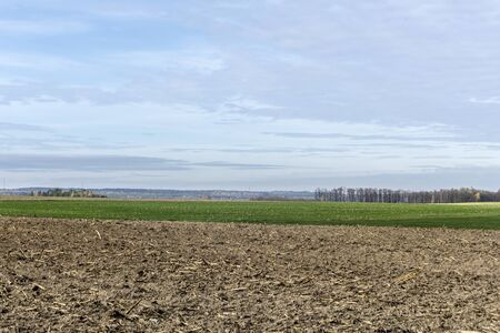 Late autumn. Brown arable land and meadows for cows . Forest and trees in the background. Dairy farm. Podlasie, Poland.
