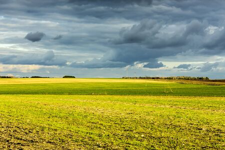 Late autumn. Yellow and green fields. Trees and the evening sky in the background. Dairy farm. Podlasie, Poland.