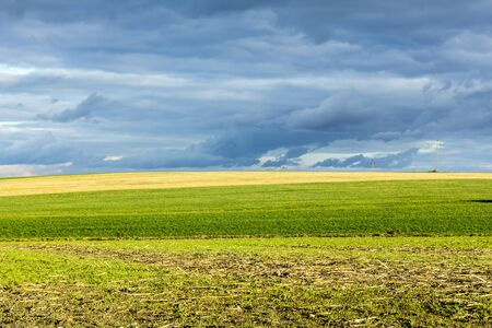 Late autumn. Yellow and green fields. Dark evening sky in the background. Dairy farm. Podlasie, Poland. 写真素材