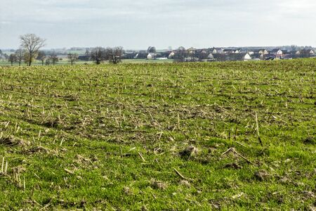 Late autumn. A green field on which corn was mowed. The village in the background. Dairy farm. Podlasie, Poland. 写真素材