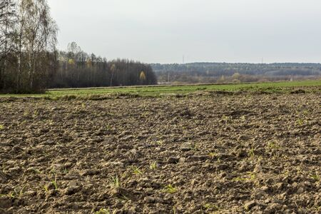 Late autumn. Large plowed field.  Meadows, birch trees and forest in the background.  Dairy farm. Podlasie, Poland.