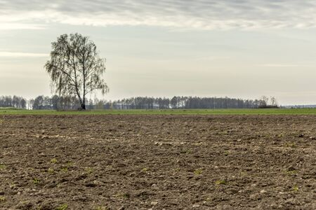 Late autumn. Large plowed field.  Meadows, birch  and forest in the background.  Dairy farm. Podlasie, Poland. 写真素材