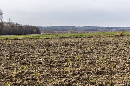 Late autumn. Large plowed field.  Meadows  and yellow-green  forest in the background.  Dairy farm. Podlasie, Poland. 写真素材