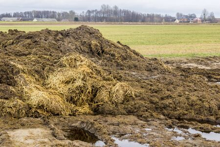 Early spring. Manure mixed with straw is prepared to fertilize the field. Close up.The village in the background. Milk farm. Podlasie, Poland. 스톡 콘텐츠