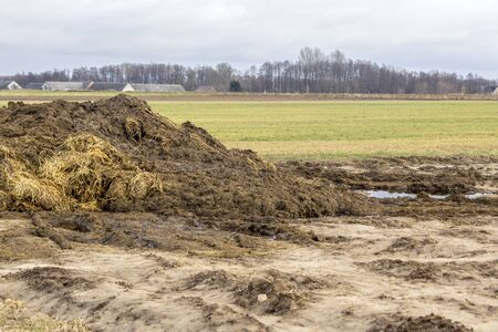 Early spring. Manure mixed with straw is prepared to fertilize the field. The village in the background. Dairy farm. Podlasie, Poland. 스톡 콘텐츠