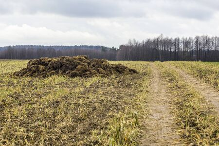 Early spring. Manure mixed with straw is prepared to fertilize the field. Forest in the background. Milk farm . Podlasie, Poland. 스톡 콘텐츠