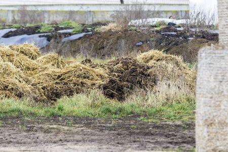 Manure mixed with straw is prepared to fertilize the fields. Dairy farm. Podlasie, Poland. 스톡 콘텐츠