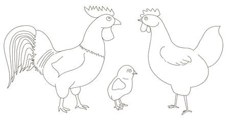 Hen, rooster, and chicken on a white background. A good picture for a site about animals, poultry, and a farm. 矢量图像