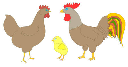 Hen , rooster and chicken on a white background. Good picture for a site about animals, poultry and farm. 矢量图像