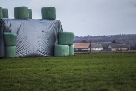 Bales of silo in a blue membrane  and laid on the field in a high pyramid. Close up.  Late autumn in Europe after harvesting.