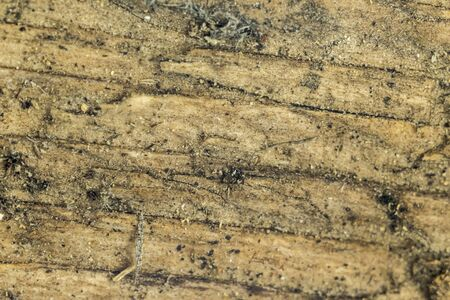 Old cracked board covered with wet sand. Macro photo. Good background for a site about wood, abstraction, art, weather.
