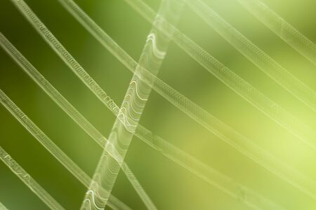 The web is trembling from the wind. An interesting effect on macro photography. Beautiful spiral abstraction form on a green background.