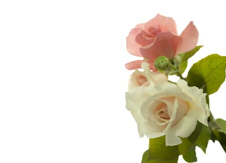 bouquet of roses border for stationary isolated on white Stock Photo
