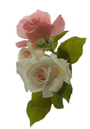 valentine rose bouquet isolated on white background photo