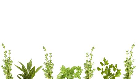 fresh herbs for border