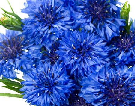 blue cornflower or bachelors button Centaurea cyanusblue - blue flower background Stock Photo - 5586923