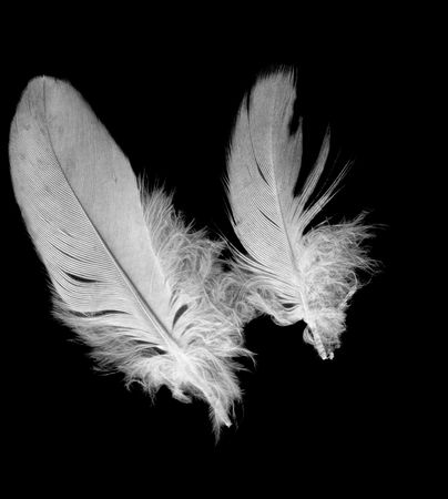 two bird feathers isolated on black background texture