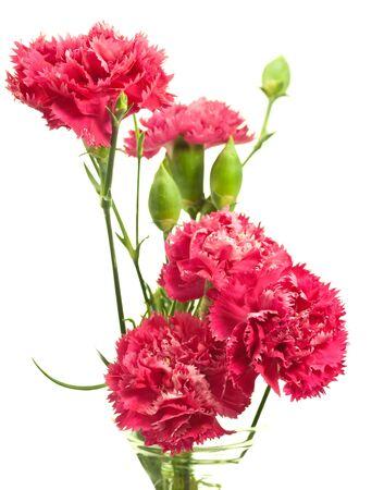 pink carnation array in vase over white