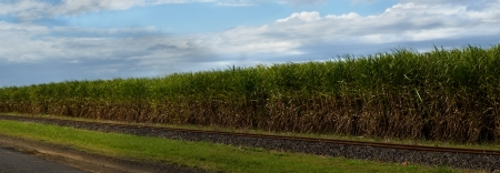 panoramic sweet sugar cane plantation in australia with rail track and blue cloudy storm sky photo
