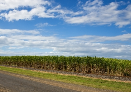 agriculture sugar cane plantation in Queensland Australia with blue cloudy sky background copyspace Stock Photo - 14151578
