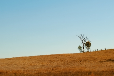 Australian undulating outback winter horizon with clear blue sky dead tree fence posts and dry grass Stock Photo - 15511703