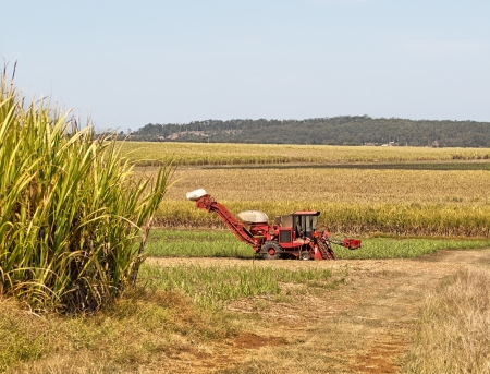 Red machinery farm cane harvester on Australian sugarcane plantation background photo