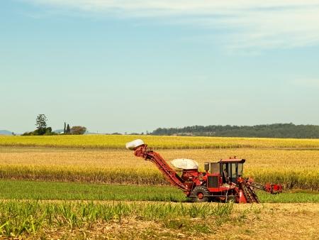 Red Farm machine cane harvester on Australian agriculture land sugarcane plantation  Foto de archivo