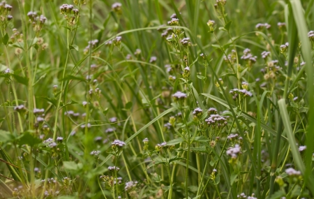 green vegetation: Green vegetation environment natural background flora